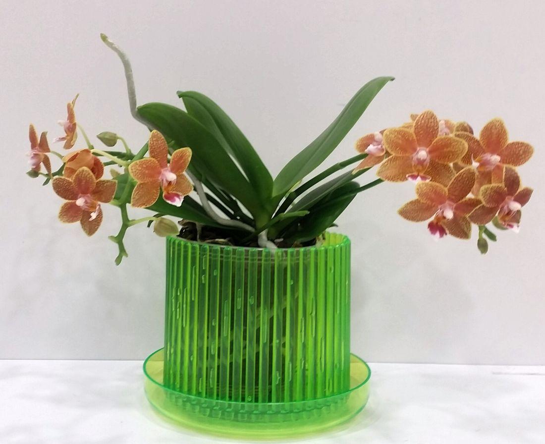Кашпо для орхидей Корона